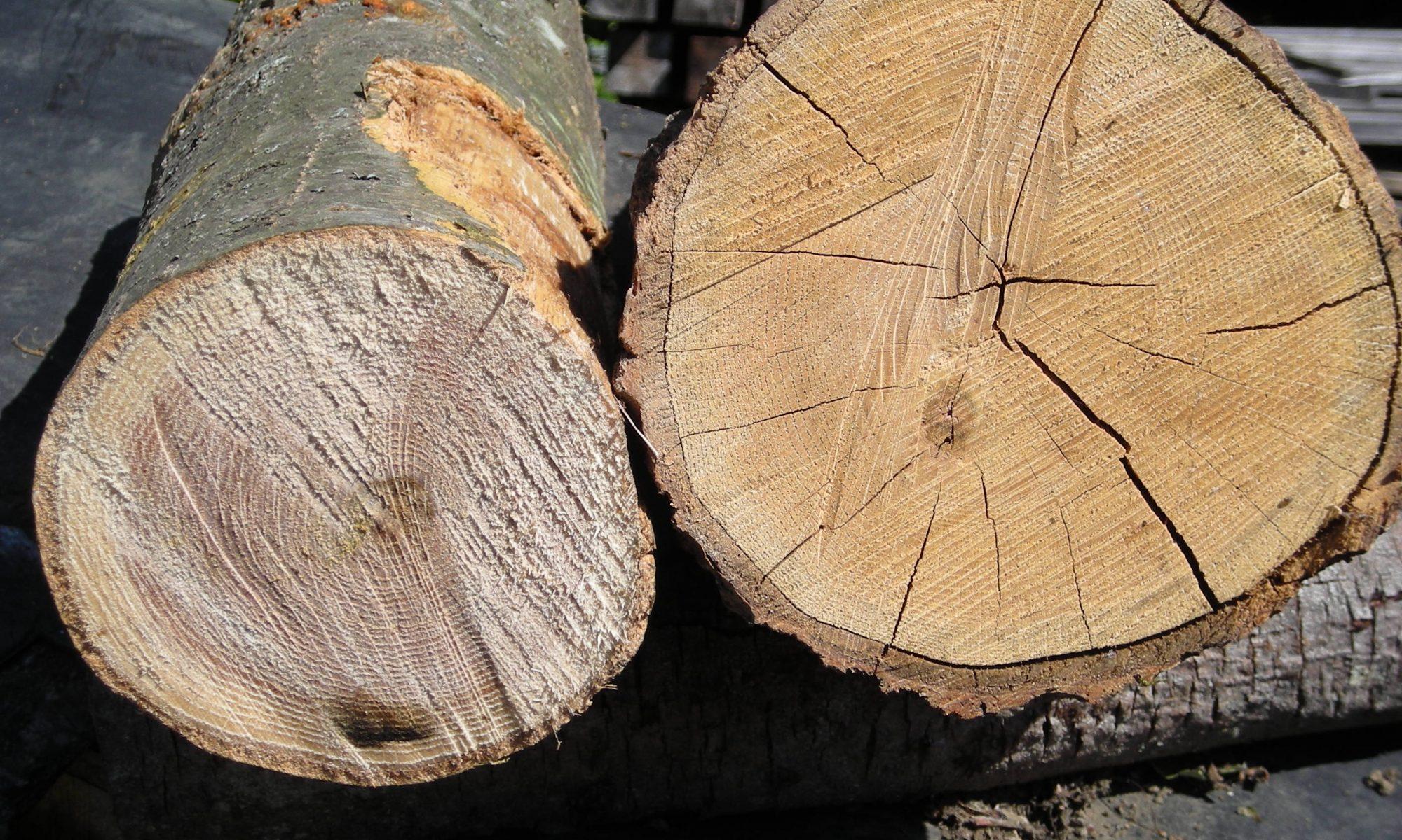 What Is Green Vs Seasoned Wood Little Acorn Furniture